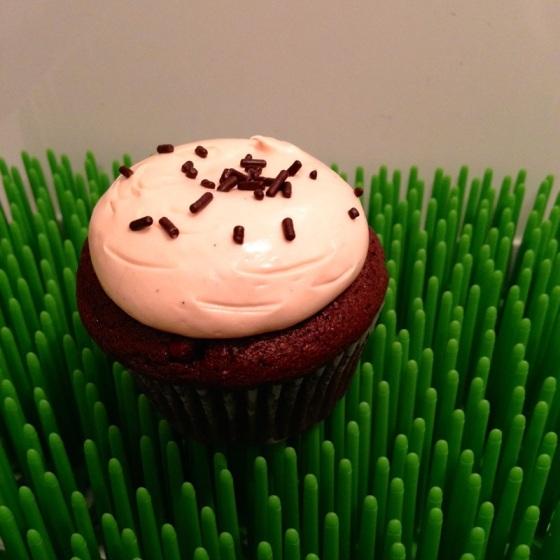 Cupcake Main